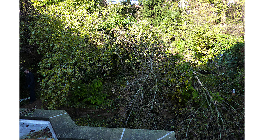 Fallen tree clearance / Before