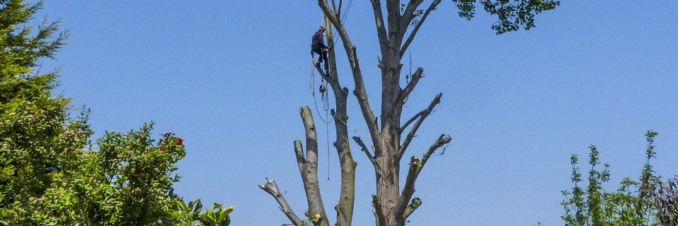 North London's local tree surgeons