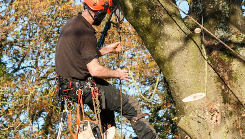 Tree felling London
