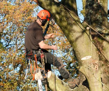 Tree Felling in London