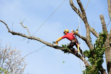 Tree Surgeon Costs