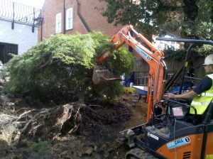 Removing the tree with a digger