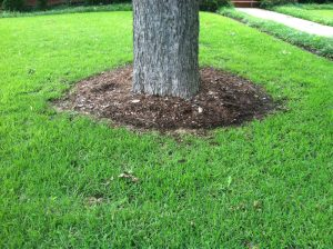 Base of tree and lawn